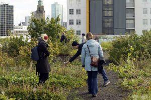Dakakker, rondleiding voor buitenlandse bezoekers, Rotterdam 06-10-2017