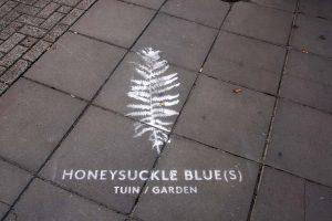 honeysuckle blues garden