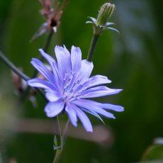 Honeysuckle Blue(s) Garden, Leeuwarden: aanvulling (1)